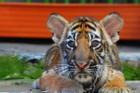'Chụp ảnh cùng động vật hoang dã là tội ác'