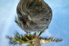 Bức ảnh chụp 'góc hiểm' của cây dừa khiến thanh niên phải thay điện thoại mới đăng được lên FB