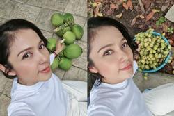 Việt Trinh bội thu dừa, dâu da đất trong vườn 3.000 m2