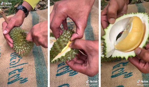 Anh nông dân bổ quả sầu riêng nhỏ xíu bằng bàn tay, kết quả bất ngờ-1