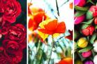 Chọn bông hoa yêu thích nhất khám phá bí mật thú vị về tính cách của bạn