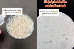 Dùng kính hiển vi soi nước vo gạo: Liệu có nên dùng để rửa mặt?