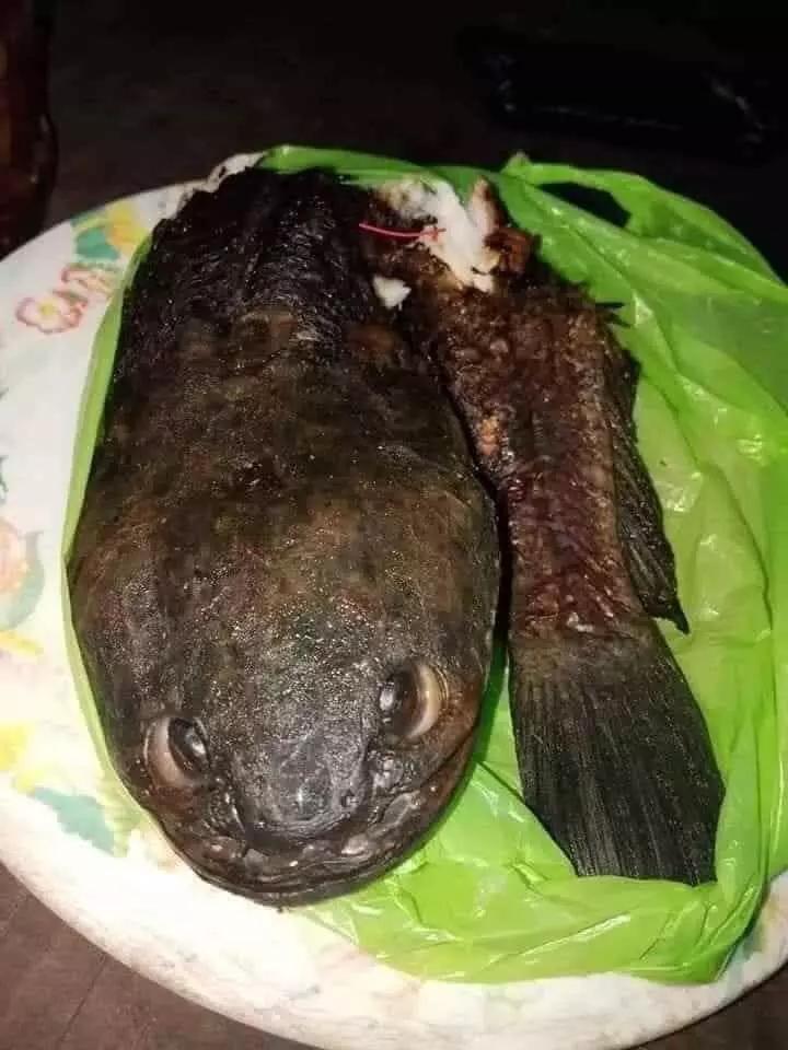 Dân tình cười bò khi chú cá cho vào chảo dầu nhưng vẫn giữ tư thế hiên ngang-5