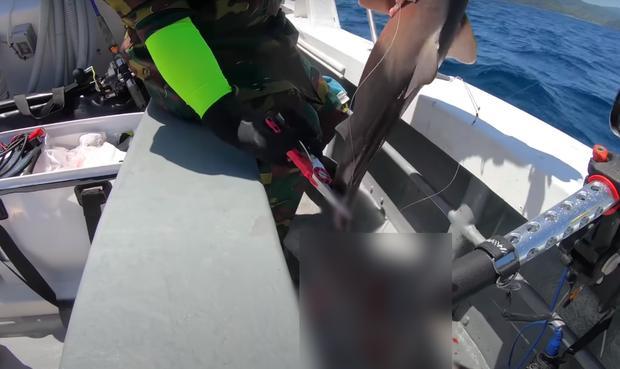Tranh cãi Quỳnh Trần JP câu cá mập con ăn, cảnh máu me cũng đưa vào video-7