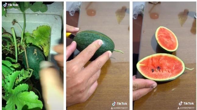 Những pha bổ quả cho thấy dưa hấu là loại trái cây bán đứng con người nhiều nhất-8