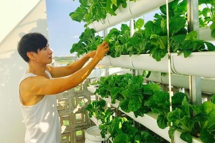 Vườn rau và trái cây của Lý Hải, Minh Hằng
