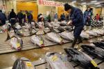 Xem cách người Nhật Bản đấu giá cá ngừ ở chợ