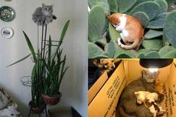 Những hình ảnh cho thấy mèo mới là loài khó hiểu nhất hành tinh chứ không phải là con gái