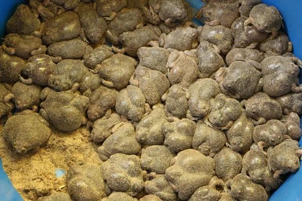 Món ăn siêu kinh dị của người Thái khiến dân mạng sốc nặng vì không tin có thể ăn được-3