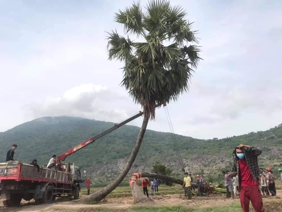 Sau mưa giông, cây tình yêu ở Tây Ninh bị quật ngã, chỉ còn lẻ bóng đi về-2