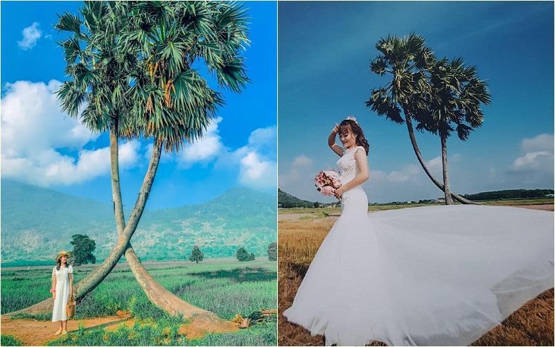 Sau mưa giông, cây tình yêu ở Tây Ninh bị quật ngã, chỉ còn lẻ bóng đi về-4