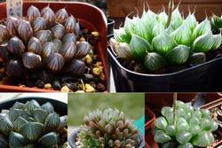 12 con giáp nên trồng loại cây nào để may mắn, vượng tài?