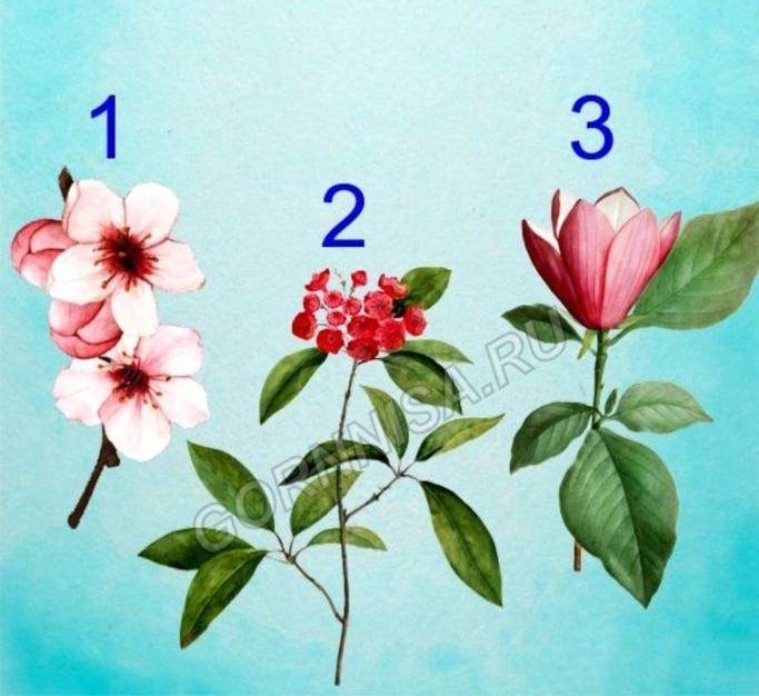 Bông hoa yêu thích nhất sẽ tiết lộ tài năng tiềm ẩn của bạn-1