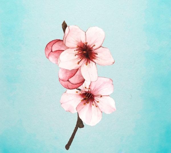 Bông hoa yêu thích nhất sẽ tiết lộ tài năng tiềm ẩn của bạn-2