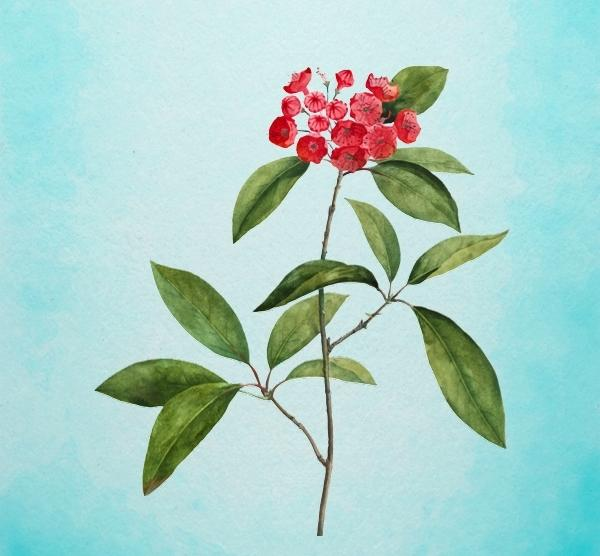 Bông hoa yêu thích nhất sẽ tiết lộ tài năng tiềm ẩn của bạn-3