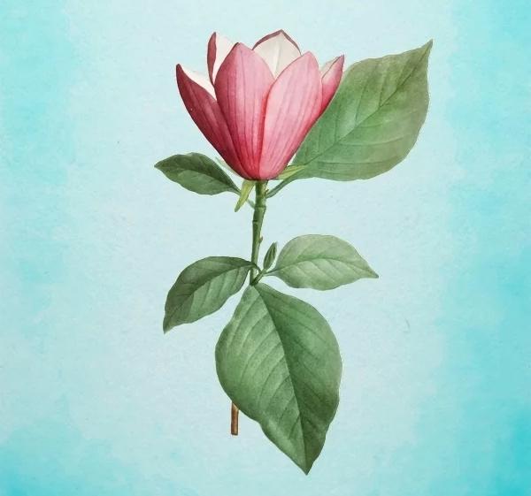 Bông hoa yêu thích nhất sẽ tiết lộ tài năng tiềm ẩn của bạn-4
