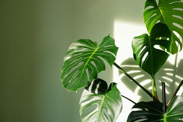 Những loài cây trong lành, đem đến may mắn và tài lộc cho 12 chòm sao-1