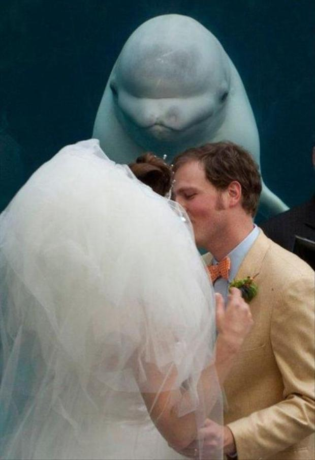 Dở khóc dở cười với loạt nhân vật phá bĩnh trong ngày cưới-10