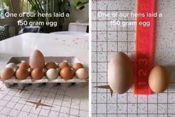 Đập trứng, chủ thớt câm nín thấy thứ rơi ra từ bên trong quả trứng gà 'siêu to khổng lồ'