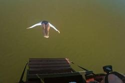 Nữ vận động viên nhảy từ khinh khí cầu xuống biển