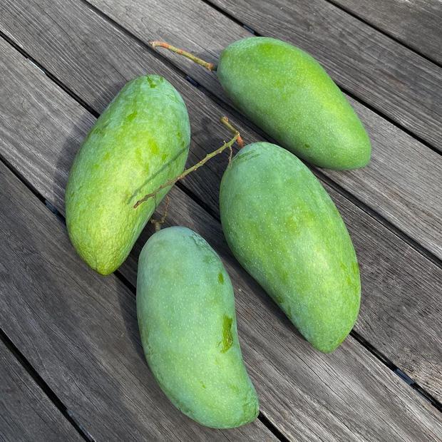 Dâu hào môn Hà Tăng cuối tuần làm nông dân, khoe trái xoài bự gần 1kg trong vườn biệt thự-1