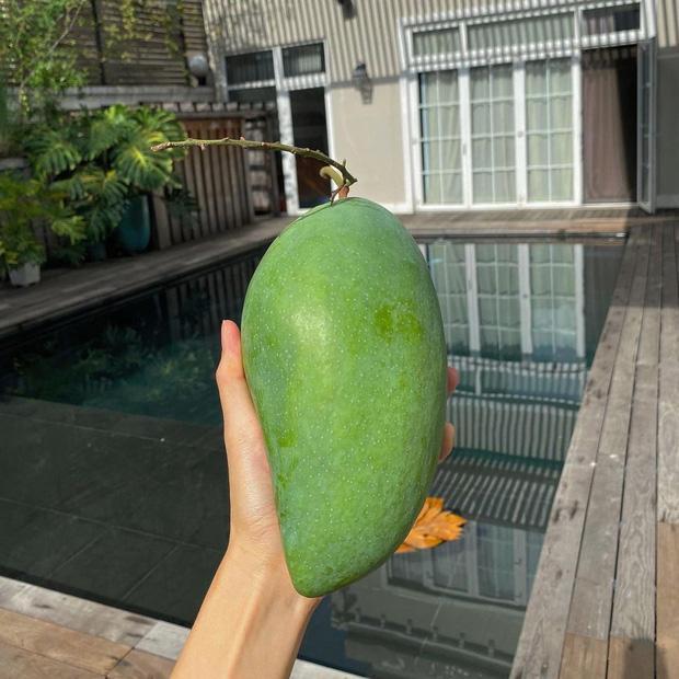 Dâu hào môn Hà Tăng cuối tuần làm nông dân, khoe trái xoài bự gần 1kg trong vườn biệt thự-3