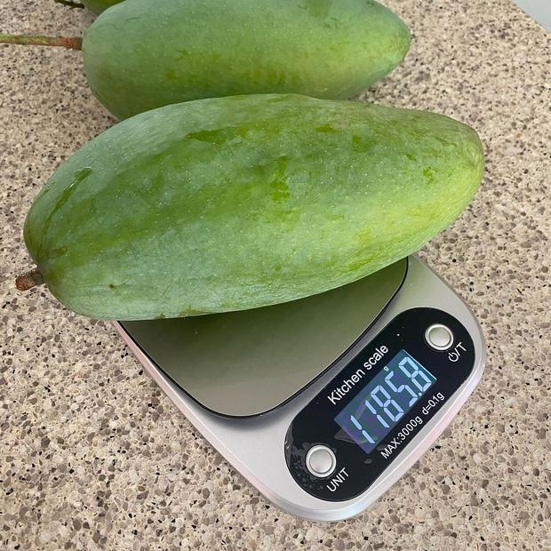 Dâu hào môn Hà Tăng cuối tuần làm nông dân, khoe trái xoài bự gần 1kg trong vườn biệt thự-4