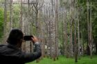 'Khu rừng ma' mọc giữa New York