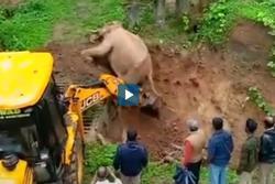Cần cẩu giải cứu voi kẹt dưới hố cát ở Ấn Độ