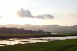 Khung cảnh hoàng hôn bình yên trên ruộng lúa Bình Định