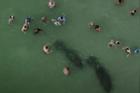 Du khách chọc phá lợn biển ở Mỹ