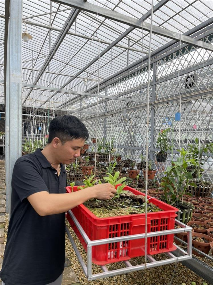 Chủ vườn lan Tam Đảo bật mí cách trồng lan cực chất cho người mới bắt đầu-1