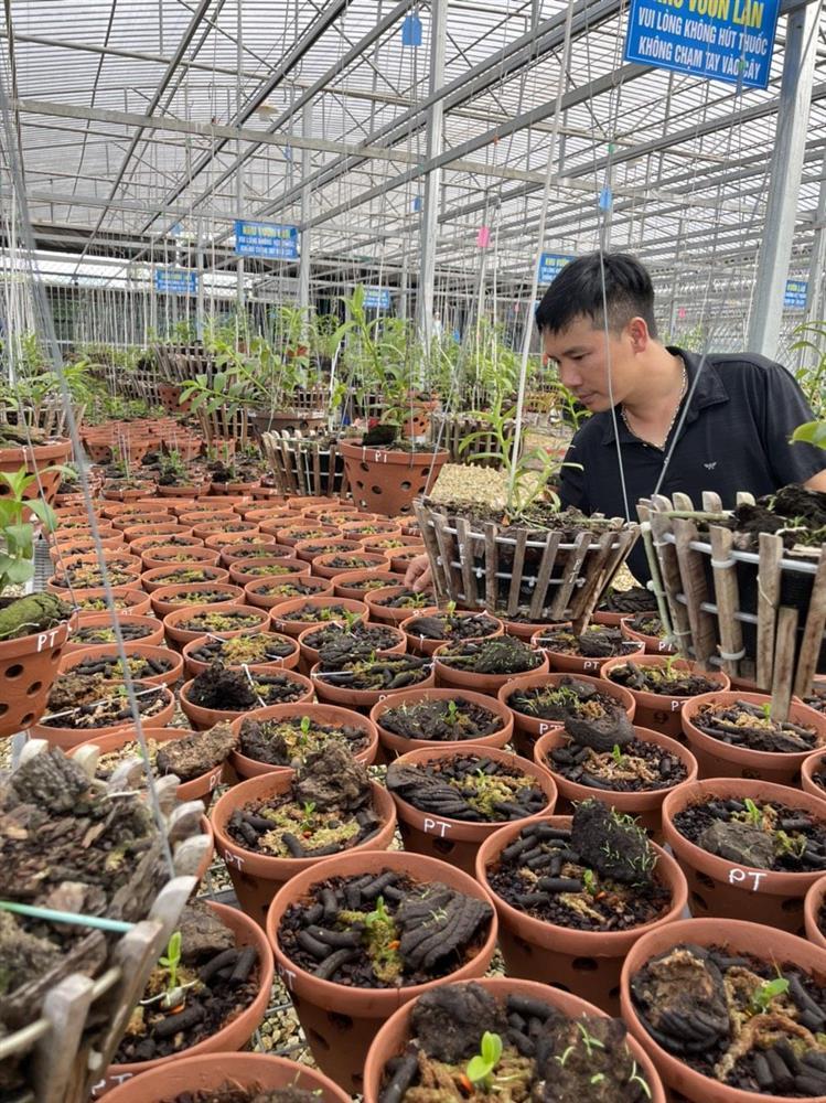 Chủ vườn lan Tam Đảo bật mí cách trồng lan cực chất cho người mới bắt đầu-2