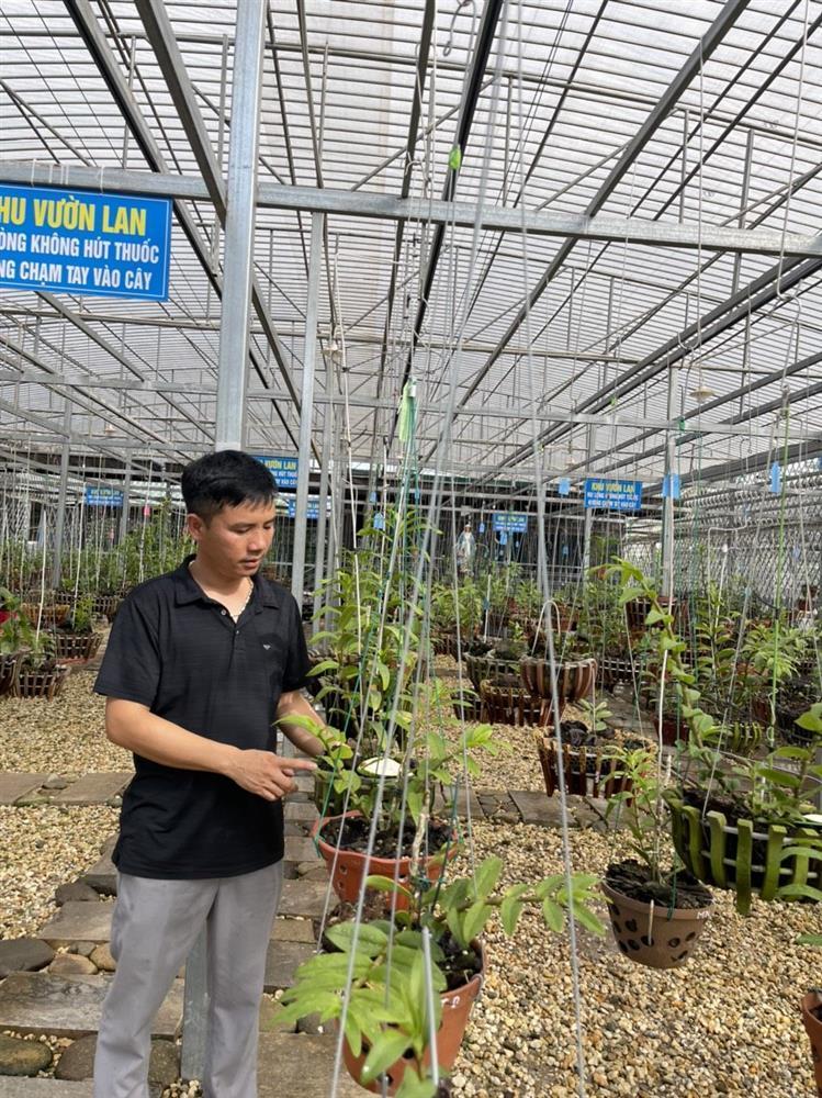 Chủ vườn lan Tam Đảo bật mí cách trồng lan cực chất cho người mới bắt đầu-5