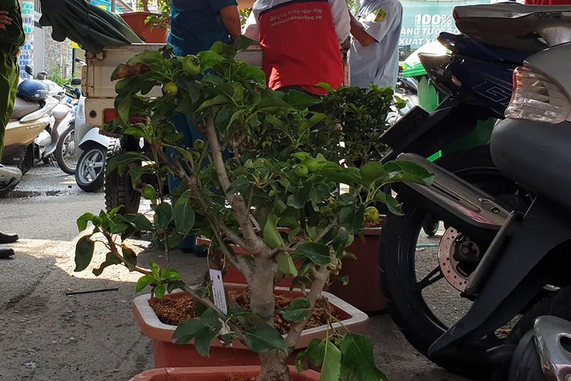 TP HCM: Dân vùng phong tỏa được tặng cây táo Mỹ, thi ai chăm cây tốt hơn-3