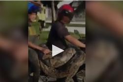 Người đàn ông vô tư cười đùa, chở trăn nặng 200kg trên xe máy