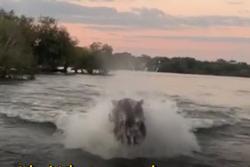 Du khách chết khiếp vì bị hà mã truy đuổi trên sông