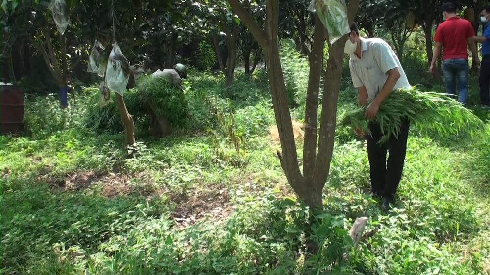 Lai lịch người nước ngoài trồng 3.000m2 cần sa ở bãi giữa sông Hồng-1