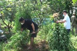 Lai lịch người nước ngoài trồng 3.000m2 cần sa ở bãi giữa sông Hồng