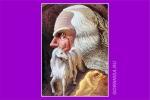Chọn một thiên thần và nhận lấy lời khuyên để sớm thành công trong cuộc sống-6