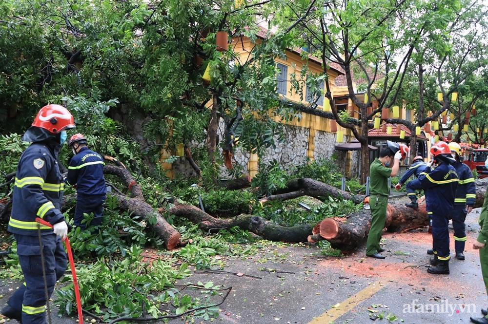 Hà Nội: Cây cổ thụ hàng chục năm tuổi bất ngờ bật gốc sau trận gió lớn, đè sập tường Tòa án nhân dân tối cao-7