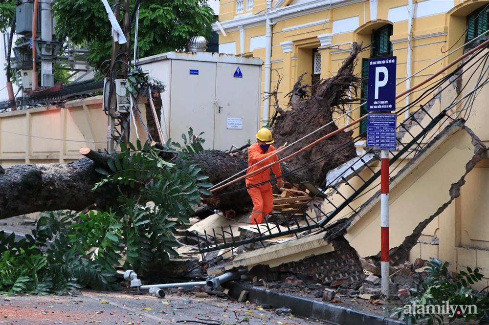 Hà Nội: Cây cổ thụ hàng chục năm tuổi bất ngờ bật gốc sau trận gió lớn, đè sập tường Tòa án nhân dân tối cao-9
