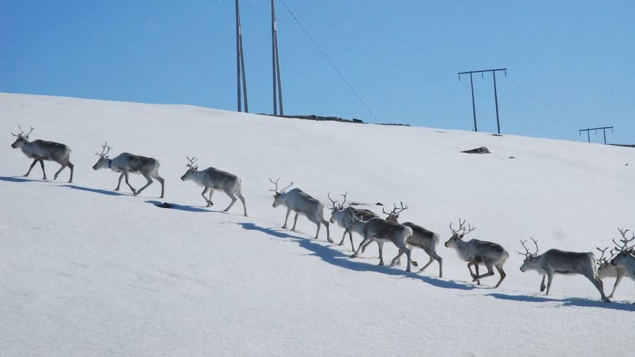 Người phụ nữ một mình đến Bắc Cực sống để trốn dịch-3