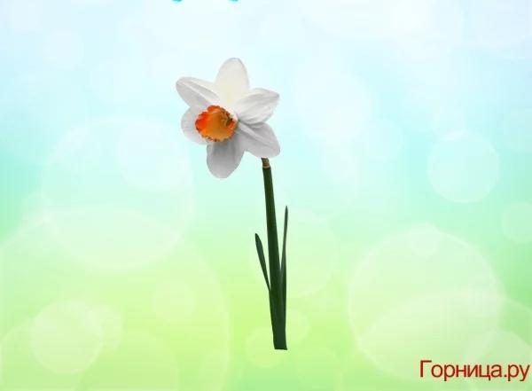 Chọn một bông hoa soi độ dễ thương của bạn ở mức nào?-2