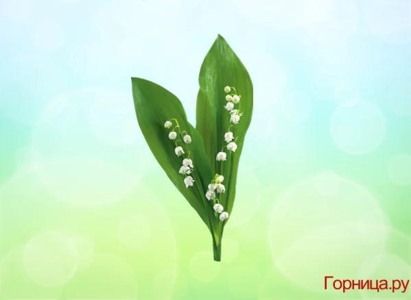 Chọn một bông hoa soi độ dễ thương của bạn ở mức nào?-3