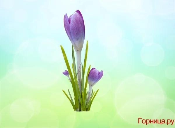 Chọn một bông hoa soi độ dễ thương của bạn ở mức nào?-4