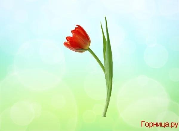 Chọn một bông hoa soi độ dễ thương của bạn ở mức nào?-5