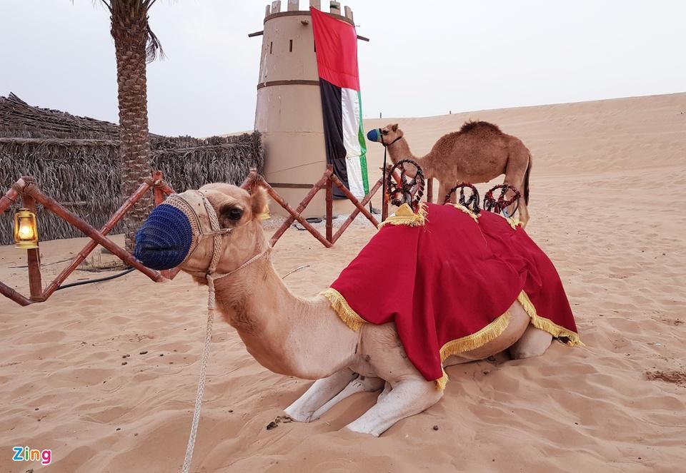 10 sự thật thú vị về UAE-8