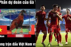 'Gà tiên tri' dự đoán kết quả Việt Nam - UAE: Lo lắng nhưng sẽ thắng!