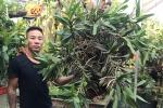 Mối duyên gần 10 năm của ông chủ vườn 8x với hoa lan
